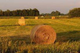 Distretto rurale, un bando per le imprese del settore