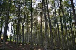 Taglio del bosco e autorizzazioni: il grido di allarme dalle imprese del settore